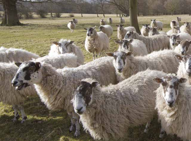sheep-worming-the-future info